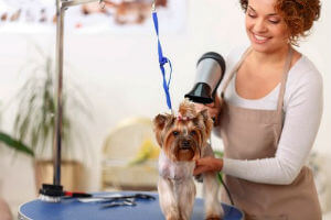 Pet Care Insurance and Pet Groomers Insurance